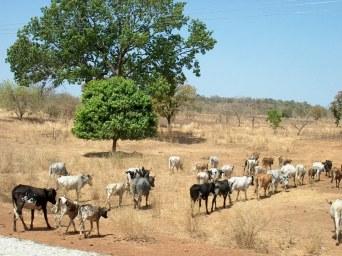 069 Burkina Faso