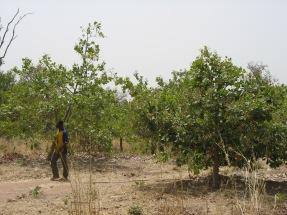 Burkina 376c